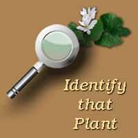 Identify that Plant website